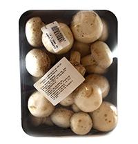 ciuperci champignon romania